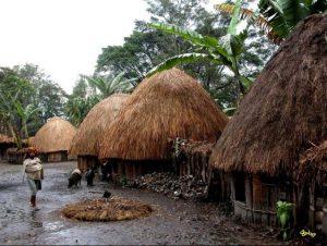 rumah suku asmat