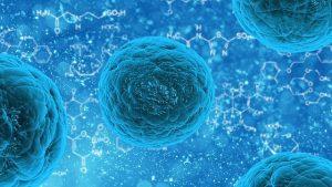 sel punca, stem cell