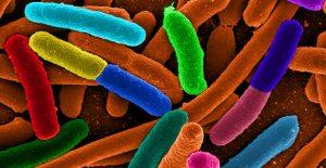 mikrobiota usus, mikrobioma