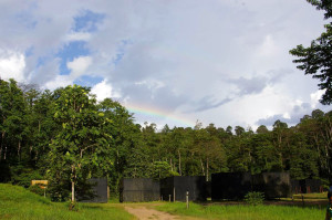 Malula Field Station, Malaysia. (Credit: Michael O'Brien/UZH)