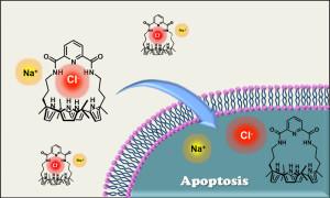 Transporter ion sintetis dapat menginduksi apoptosis dengan memfasilitasi transportasi anion klorida ke dalam sel.