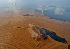 Sebuah penyu mati di tumpahan minyak di Louisiana Barataria Bay pada tahun 2010. (Credit: JOEL SARTORE, NATIONAL GEOGRAPHIC)
