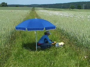Sampling cacing tanah di rumput pembatas antara lahan pertanian di Southern Bavaria. (Photo: S. Wolfrum / TUM)