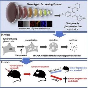 Mekanisme aksi vacquinol-1 terhadap glioblastoma pada tikus percobaan