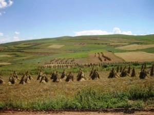 pertanian dataran tinggi tibet