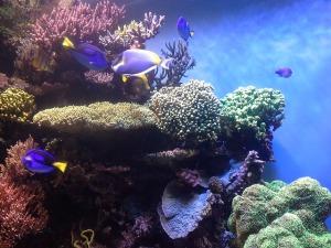 terumbu karang.