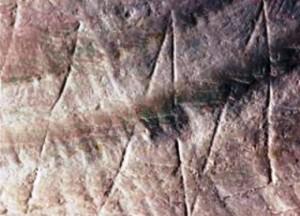 ukiran fosil kerang homo erectus