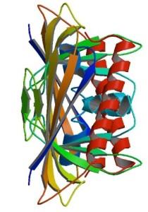 Bet v 1, alergen dari serbuk sari Birch. (Image: PDB 1BV1)