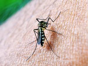 malaria, anopheles