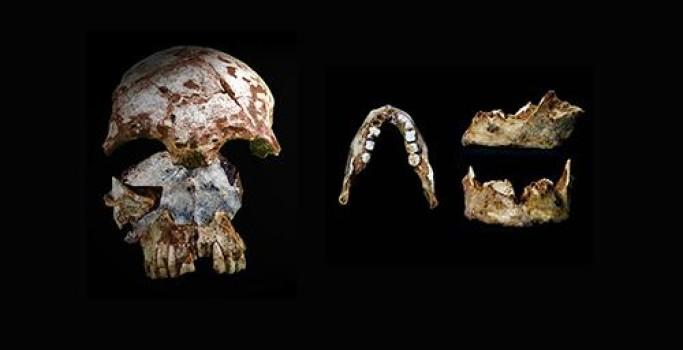 fosil, manusia purba