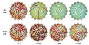 Kadar protein yang terkait dengan LTP selama siklus tidur. (Blanco et al.; CC BY 4.0)