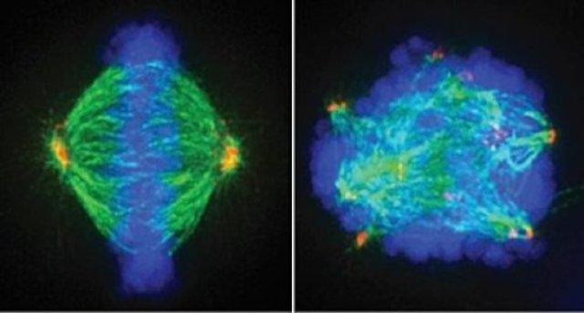 pembelahan sel, sel kanker