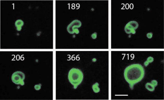 membran sel, sintetik