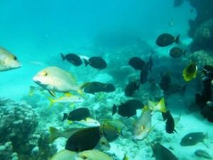 Ningaloo reef, Australia Barat