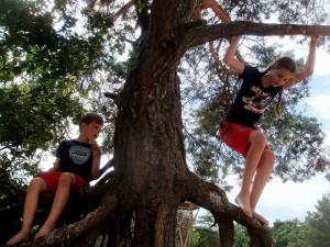memanjat pohon