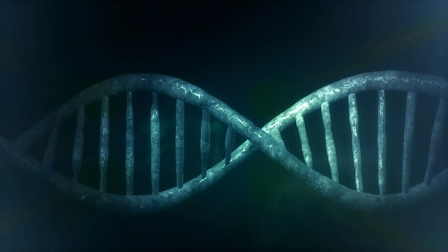 gen, dna, mitokondria