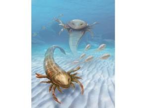 kalajengking laut, fosil