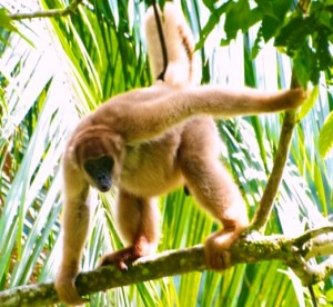 primata, hutan tropis