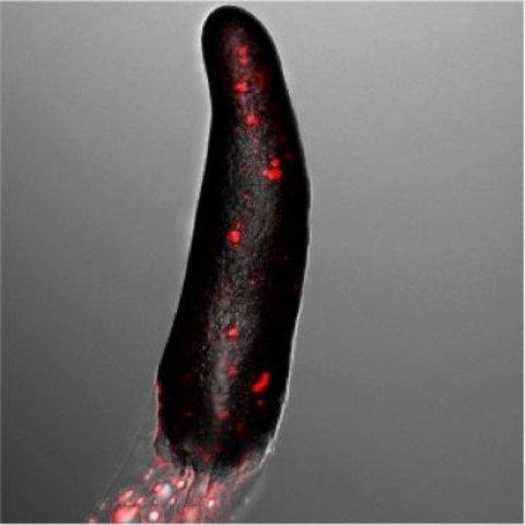 slug, amuba sosisal
