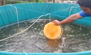 Ternak Ikan Hasil Maksimal dengan Sistem Bioflok