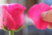 Bagian Bunga yang Ikut Menyusun Buah